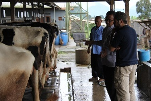 Visit to the local dairy farm