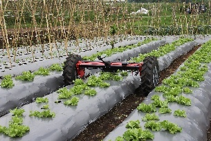 Di-Wheel - lettuce row scan