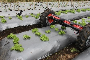 Di-Wheel about to start scanning a lettuce row via a smart phone app attached to the robot